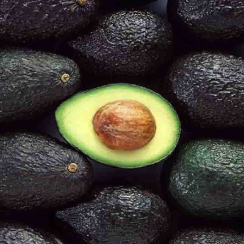 aguacate hass cluster